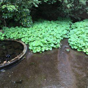 【動画】柿田川公園より。柿田川湧水群は名水百選にも選ばれる名水!