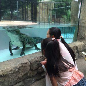 熱川バナナワニ園に行くなら餌やりを見よう!